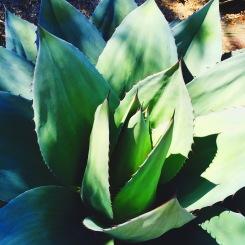 Monstrous Succulent