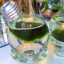 photosynthetic radiance