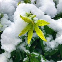 Snow Green